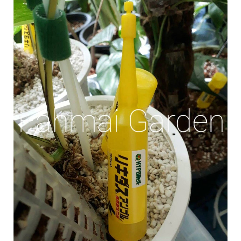 hyponex Ampoule สีเหลือง ปุ๋ยปักสำหรับไม้งามหลอดละ 59 ฿ ขนาด 35 ml. สินค้านำเข้าชื่อดังไฮโปเนกซ์ แอมเพิล พร้อมส่ง