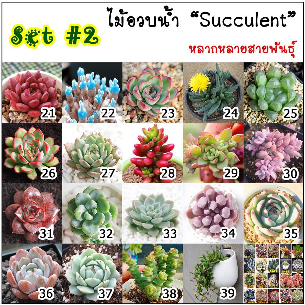 🌟สินค้าขายดี 🌟🌿เมล็ดไม้อวบน้ำ Succulent กว่า 40 สายพันธุ์ SET-2