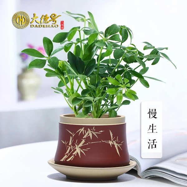 กระถางดอกไม้ กระถางดอกไม้ขนาดเล็ก Yixing Zisha เซรามิกกระถางไม้อวบน้ำที่แกะสลักและทาสีอย่างดี โต๊ะทำงานกระถางดอกไม้ในร่ม