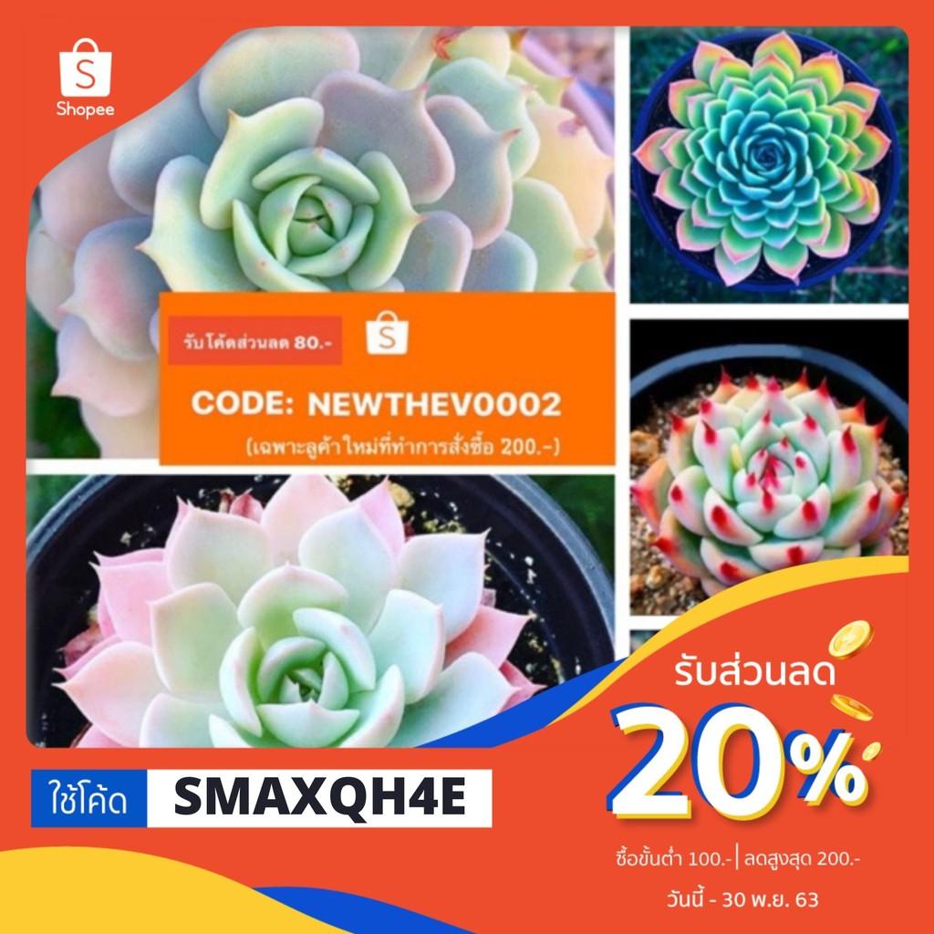 ใช้โค๊ดลด20%‼️ซื้อ1แถม1 🍀เมล็ดไม้อวบน้ำ Succulent 🍀50/100เมล็ด
