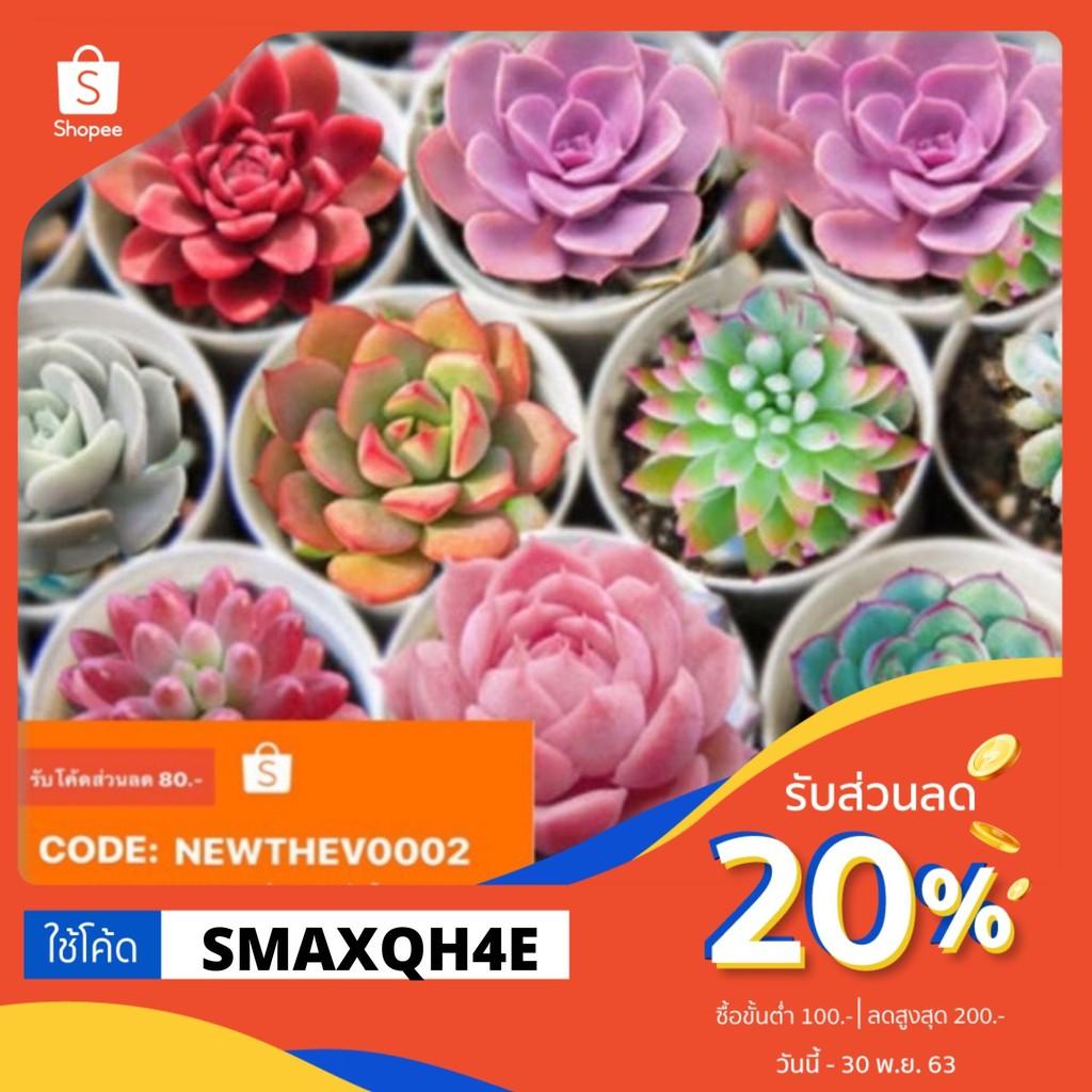 ใช้โค๊ดลด20%‼️ ซื้อ1แถม1 เฉเพาะเมล็ดMix Succulent เมล็ดไม้อวบน้ำ (50-100เมล็ด)อัตราการงอกสูง