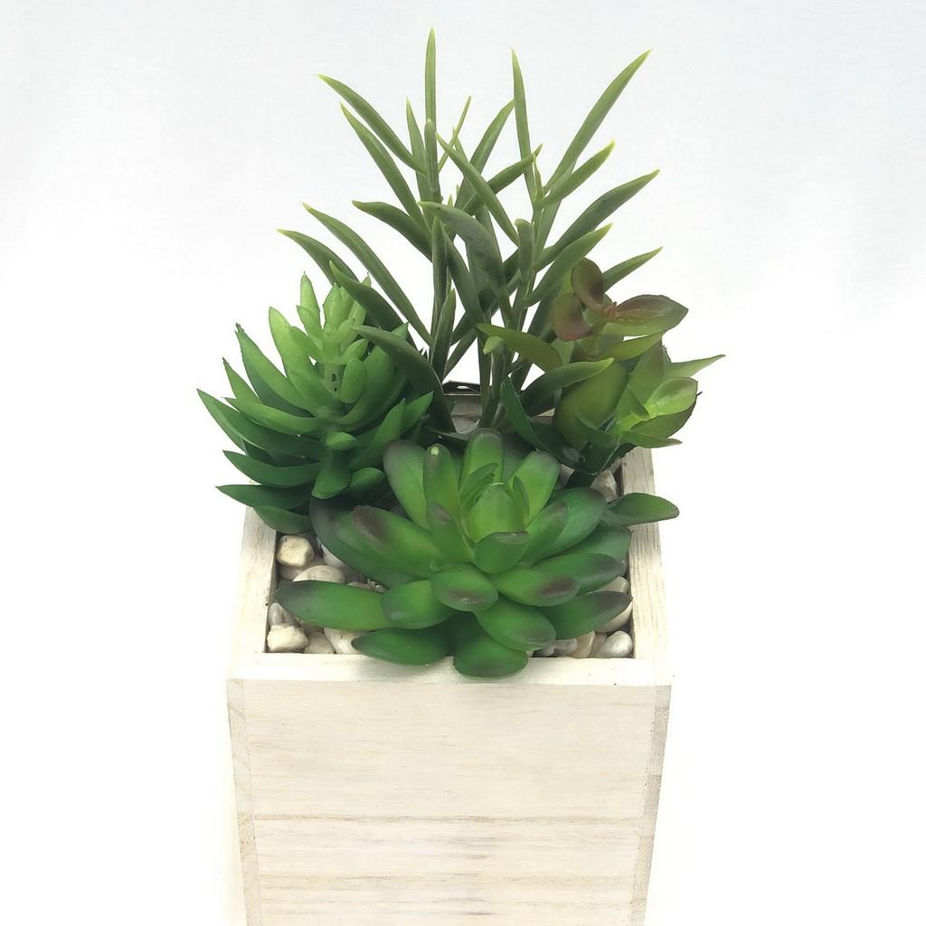 พืชฉ่ำน้ำปลอม แคคตัสปลอม กุหลาบหิน ไม้อวบน้ำปลอม จัดในกระถางไม้สี่เหลี่ยมสีขาว สำหรับวางประดับตกแต่ง