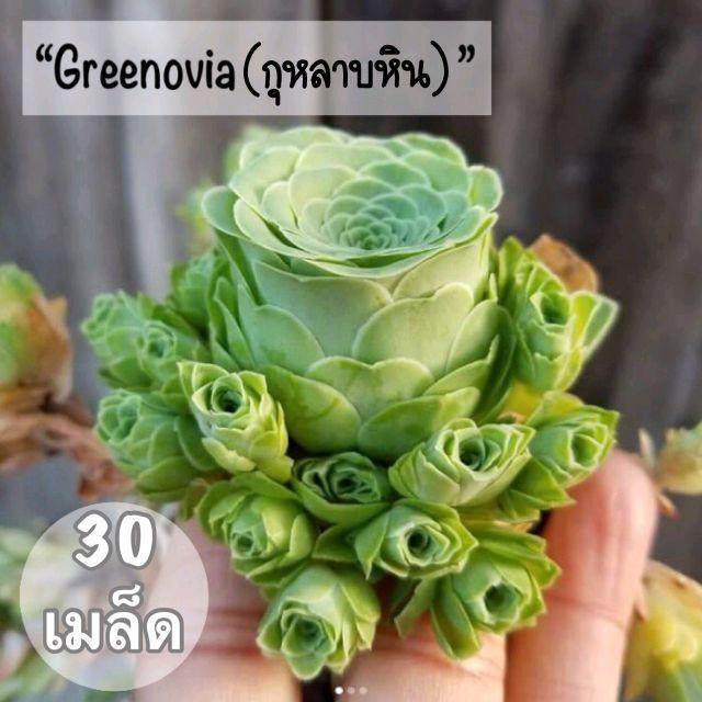 """เมล็ดพันธุ์ ไม้อวบน้ำ """"Greenovia""""(กุหลาบหิน) 30 เมล็ด"""