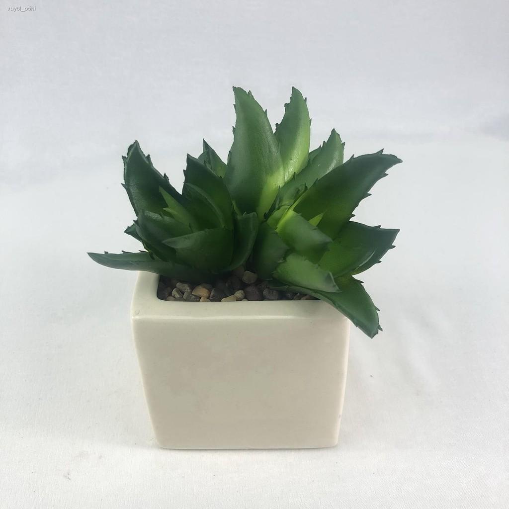 Set 3 หัว 70 บาท (เฉพาะต้นพืช 3 ต้นไม่รวมกระถาง) Ps-003np แคคตัสปลอม Succulent head ไม้อวบน้ำ สำหรับจัดสวนจิ๋ว สวนถาด สว