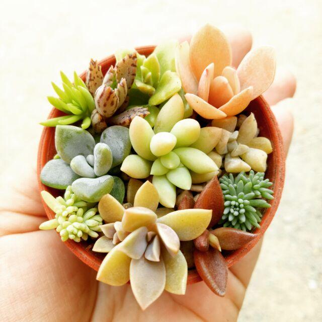 ไม้อวบน้ำรวมชนิด succulent