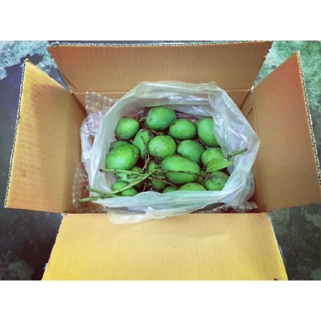 ✅🌱ส่งฟรี! 1 Kg มะม่วงเบา มะม่วงเบาปักษ์ใต้ มะม่วงลูกเล็ก มะม่วงเปรี้ยว มะม่วงเบาสด Mango