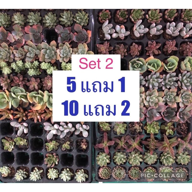 ไม้อวบน้ำ กุหลาบหิน succulents !! set 2 รวมๆ  succulent ลูกชุบ หยดน้ำ Haworthia น้องอวบน้ำ ราคาถูกๆ ครับ ^_