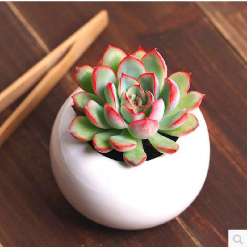 ❂☁ไม้อวบน้ำ [Swift seat] ไม้อวบน้ำในร่มสีเขียว บูติกเนื้อสำนักงานพืชและดอกไม้