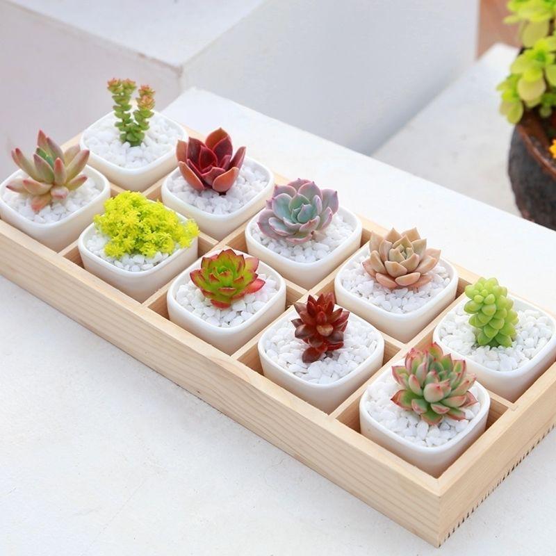☋✇【】 [กระถางเซรามิกใบเล็ก + ไม้อวบน้ำ ดิน ทางเท้า] [5 กระถางส่งกล่องไม้] succulents กระถางต้นไม้อวบน้ำ