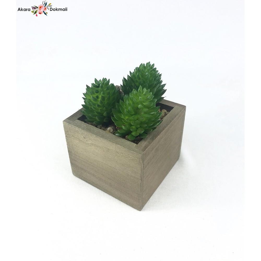 หัวแคคตัสปลอม Set 3 หัว 70 บาท (ไม่รวมกระถาง)ไม้อวบน้ำปลอม พืชฉ่ำน้ำ สำหรับจัดสวนจิ๋ว สวนถาด