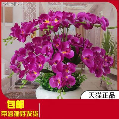 การจำลองพันธุ์ไม้อวบน้ำ♛Phalaenopsis บอนไซปลอมดอกไม้ห้องนั่งเล่นตกแต่งห้องนอนจำลองพืชสีเขียวตกแต่งโต๊ะอาหารกระถางขนาดใหญ