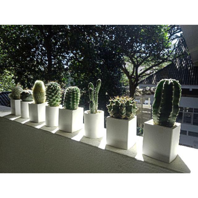 กระถาง แคสตัส cactus ไม้อวบน้ำ ขนาด 2นิ้ว กระถางปูน สีขาว ใส่ต้นไม้ แต่สวน กระบองเพชร ไม้อวบน้ำ