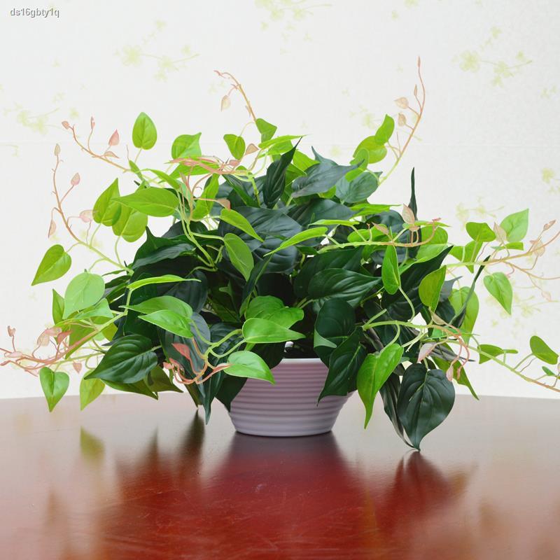 การจำลองพันธุ์ไม้อวบน้ำ✥พืชปลอม พืชสีเขียว ผักชีฝรั่งประดิษฐ์ ตกแต่งในร่มและกลางแจ้ง ไม้กระถางพลาสติก ประดิษฐ์ ดอกไม้และ