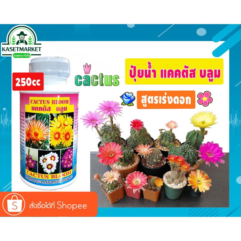 แคคตัส บลูม Cactus Bloom  ปุ๋ยน้ำ แคคตัส  ปุ๋ยcactus  (สูตรเน้นดอก) 🌺250cc