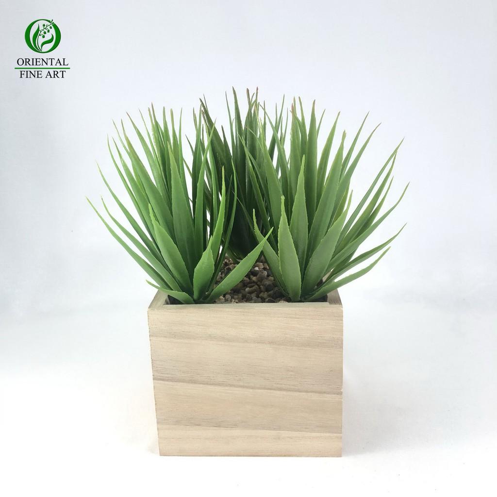 ไม้ปลอม พืชปลอม (ไม่รวมกระถาง)ไม้อวบน้ำปลอม พืชฉ่ำน้ำ สำหรับจัดสวนจิ๋ว สวนถาด สวนขวดแก้ว