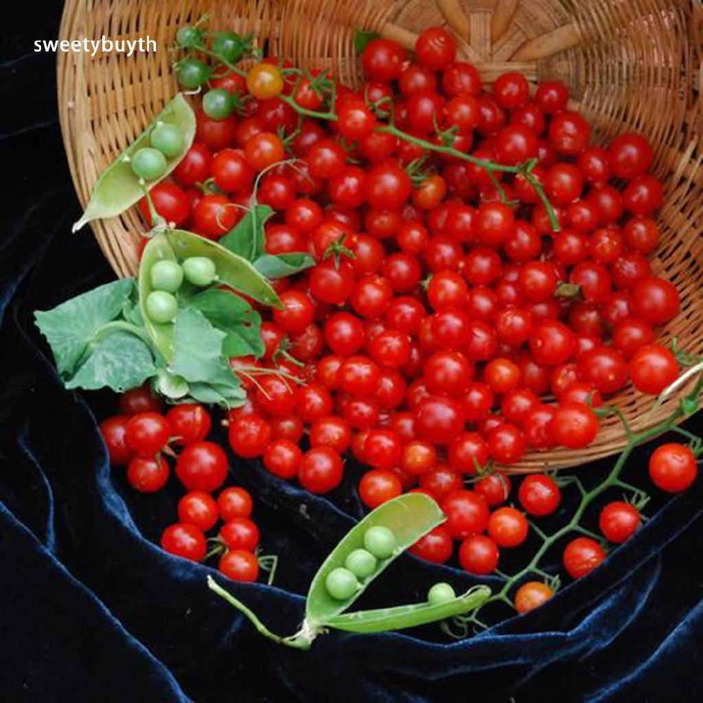 ส่วนลด60%♕ 50Pcs Home Garden Balcony Organic Delicious Fruit Cherry Tomato  Seeds