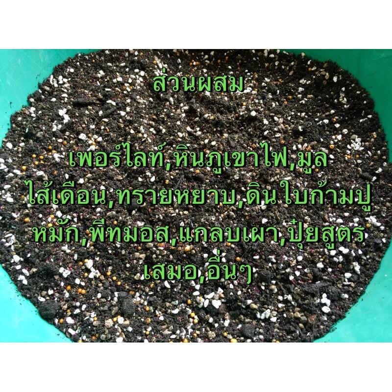 ดินปลูกแคคตัสและไม้อวบน้ำ