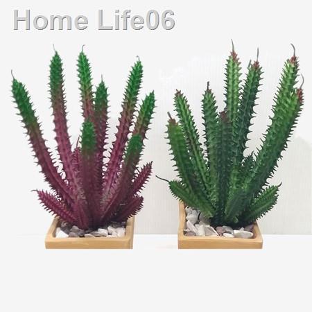 ✇ไม้อวบน้ำปลอม สแทปพิเลีย์ (Succulent Stapelia) เขียว&แดง กระบองเพชร ต้นไม้ ตกแต่งบ้าน ตกแต่งสวน จัดแจกัน กระถาง จัดสวน1