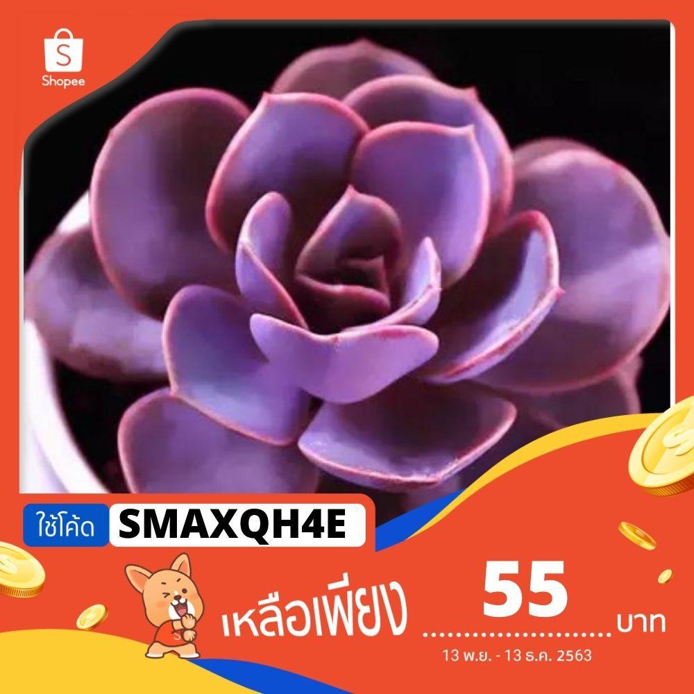 [ใช้โค้ด: SMAXQH4E ลดเพิ่ม20%] ซื้อ1แถม1( ยกเว้น Lithops)🦄 Mix !Succulent seed 🦄เมล็ดไม้อวบน้ำ50เมล็ด สีม่วง