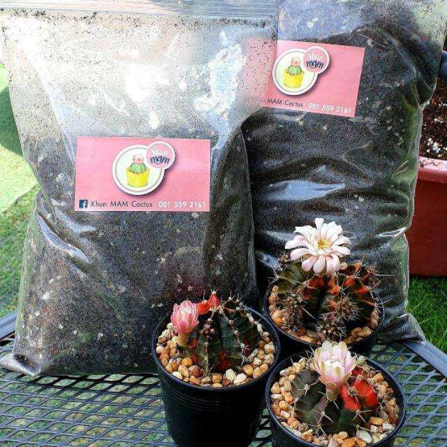 ดินแคคตัส สูตรพิเศษ #cactus  #แคคตัส #ดินแคคตัส