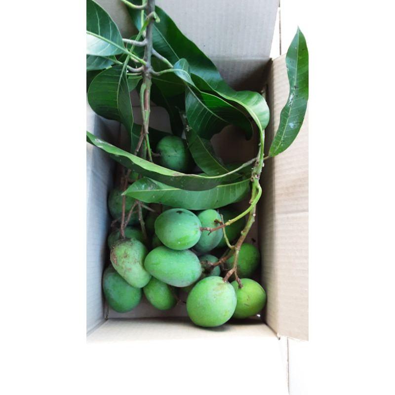 มะม่วงเบาใต้ (Light mango) นครศรีธรรมราช เก็บสดจากสวน แพค 1 กิโลกรัม