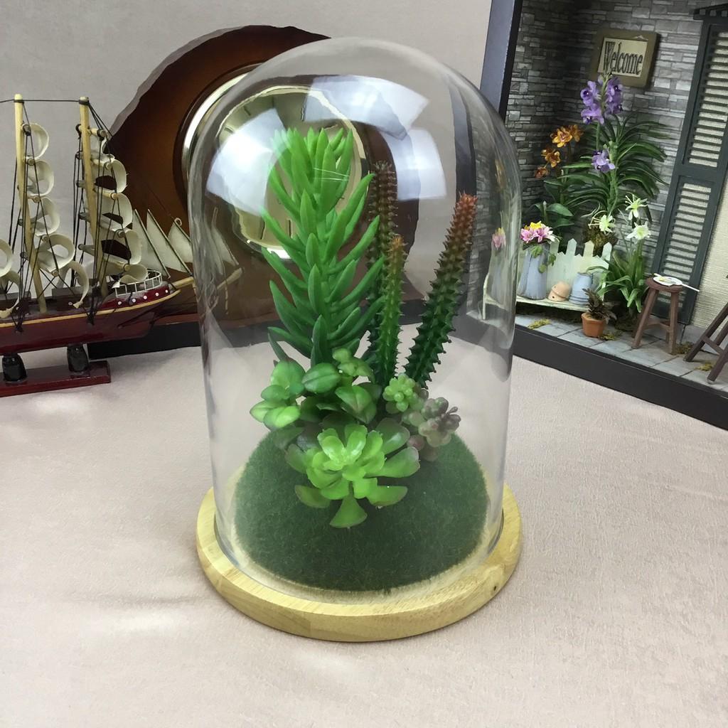 พืชอวบน้ำปลอม ไม้อิ่มน้ำ จัดในแก้วโดมสวยเหมือนจริงเหมาะสำหรับตกแต่งบ้าน