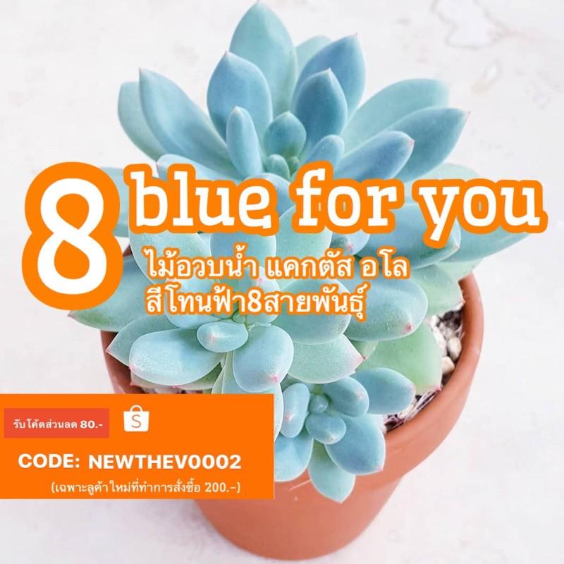 8 blue for you เมล็ด ไม้อวบน้ำ แคกตัส อโล โทนสีฟ้า 50pcs.