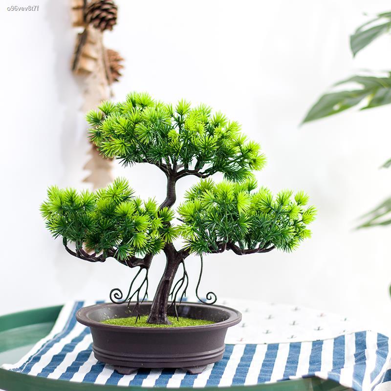 การจำลองพันธุ์ไม้อวบน้ำ✿✕♚จำลองยินดีต้อนรับต้นสนบอนไซ Podocarpus chinensis กระถางต้นสนต้นไม้ปลอมโรงแรมเดสก์ท็อปที่บ้านให