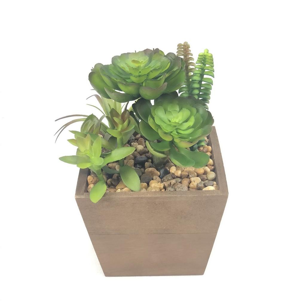 พืชอวบน้ำ,พืชอิ่มน้ำ,แคคตัส ปลอมจัดในกระถางไม้ สวยเหมือนจริง สำหรับวางประดับตกแต่งบ้านเพื่อความสวยงาม