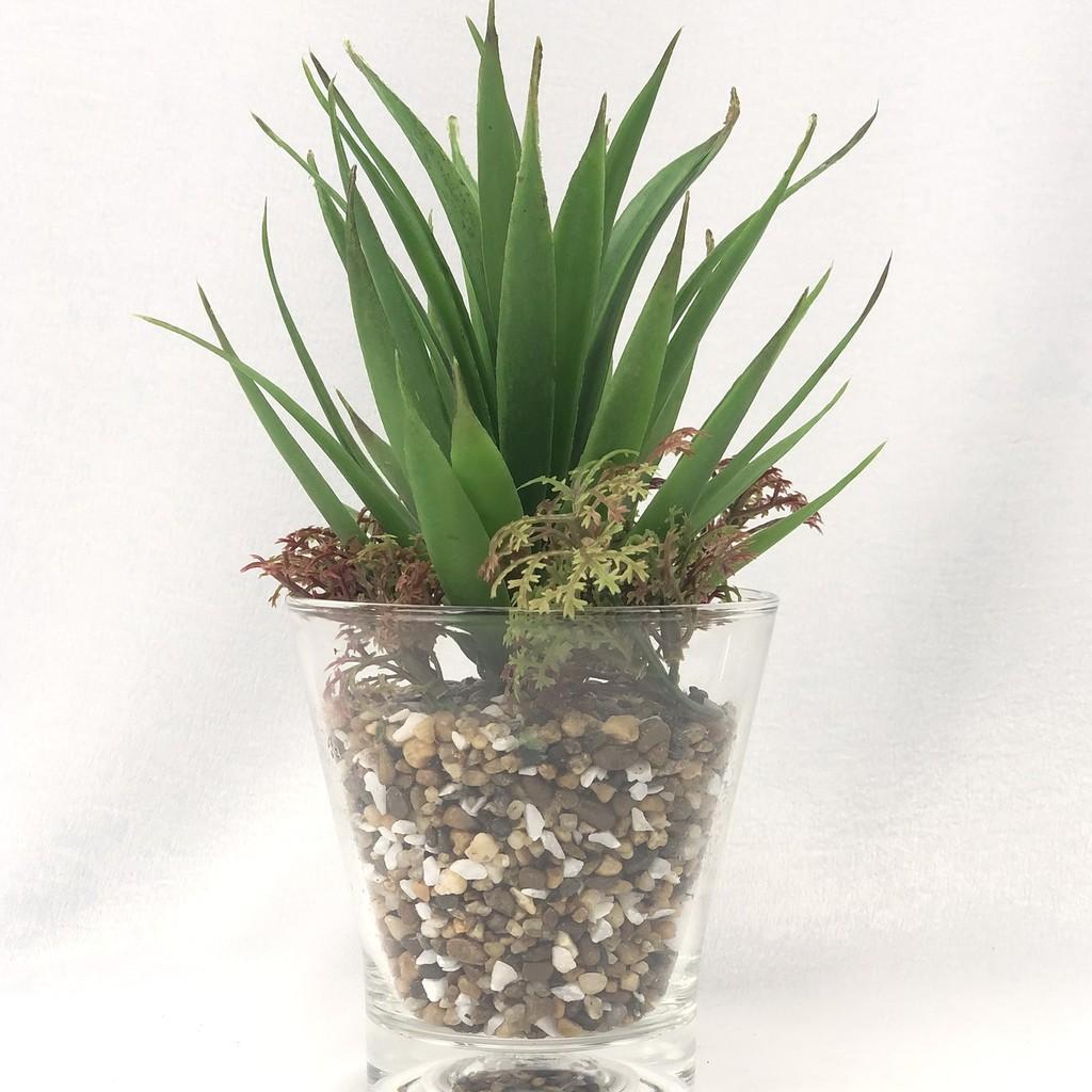 พืชอวบน้ำ ไม้ฉ่ำน้ำ ต้นไม้ปลอมพร้อมแก้ว ประดับด้วยหิน สวยเหมือนของจริง สำหรับวางประดับตกแต่ง