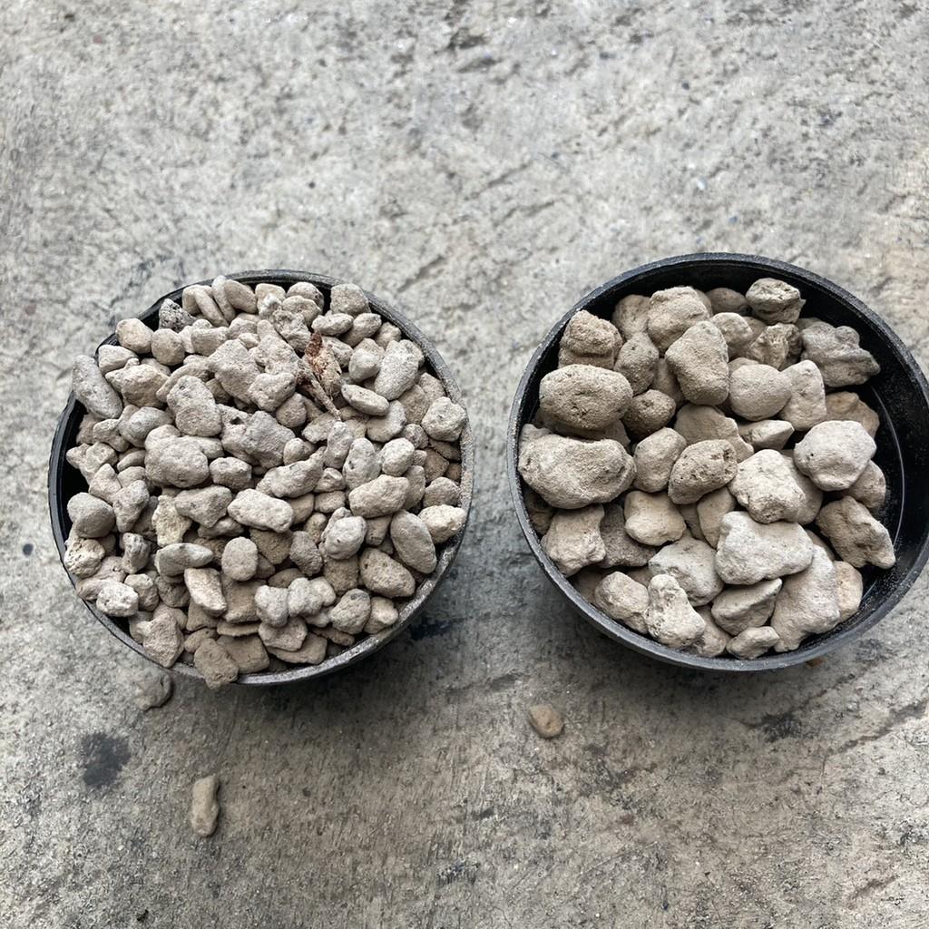 หินภูเขาไฟ/เบอร์/01/02/srilava/pumice/วัสดุปลูก/แคคตัส/กระบองเพชร/ไม้อวบน้ำ/กุหลาบหิน/200กรัม