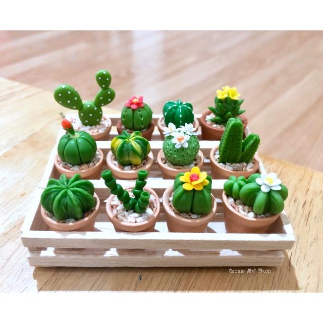 ดินปั้นกระบองเพชร Cactus จิ๋ว