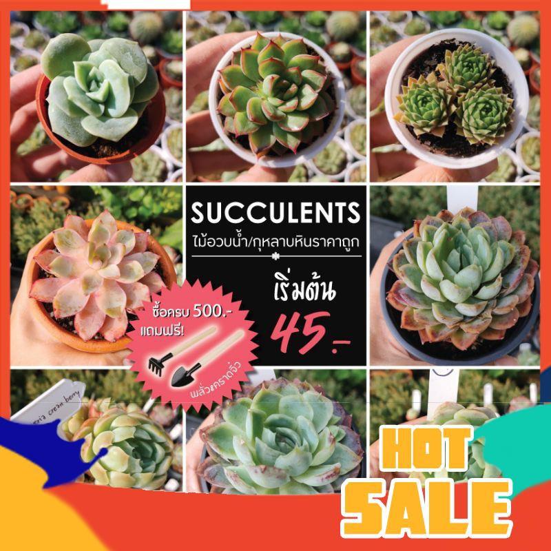 ยิมโนด่าง แคคตัส กระบองเพชร กุหลาบหิน ไม้อวบน้ำนำเข้า succulents ราคาถูก ซื้อครบ 500 บาท แถมฟรี พลั่ว&คราดจิ๋ว