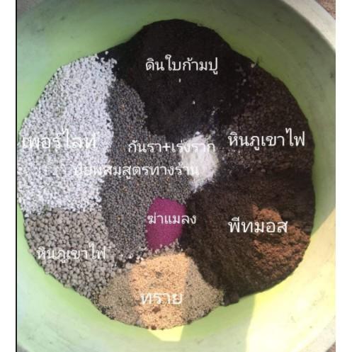 ดินปลูกแคคตัสและไม้อวบน้ำ/ดินผสมพร้อมปลูกแคคตัส/ดินปลูกแคคตัส1ลิตร