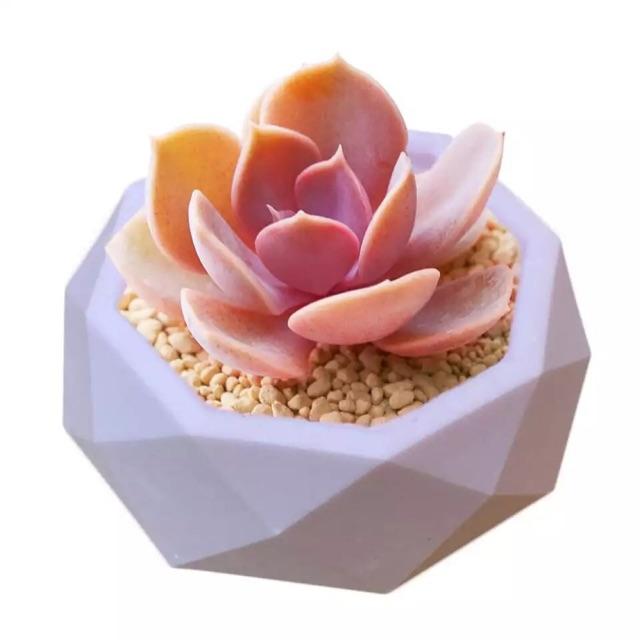🆕เมล็ดไม้อวบน้ำ Succulent จำนวน 10 เมล็ด +++
