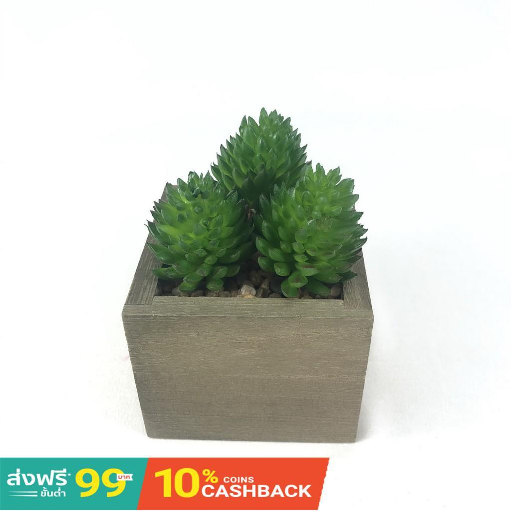กระถางดอกไม้เซรามิก№☈◊หัวแคคตัสปลอม Set 3 หัว 70 บาท (ไม่รวมกระถาง)ไม้อวบน้ำปลอม พืชฉ่ำน้ำ สำหรับจัดสวนจิ๋ว สวนถาด