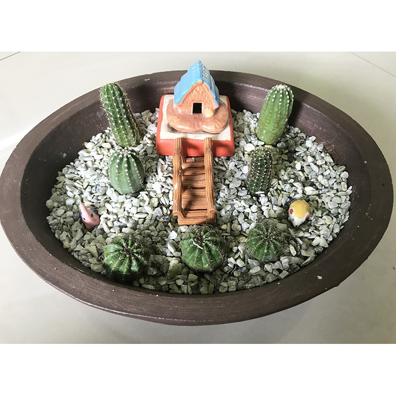 สวนถาดแบบแห้ง แคคตัส Fairy Garden สวนถาดแคคตัส กระบองเพชร Cactus