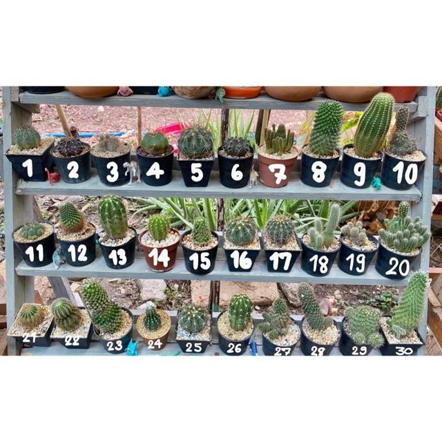 ต้นกระบองเพชร ต้นที่ 1-15  #พืชอวบน้ำ #แคคตัส