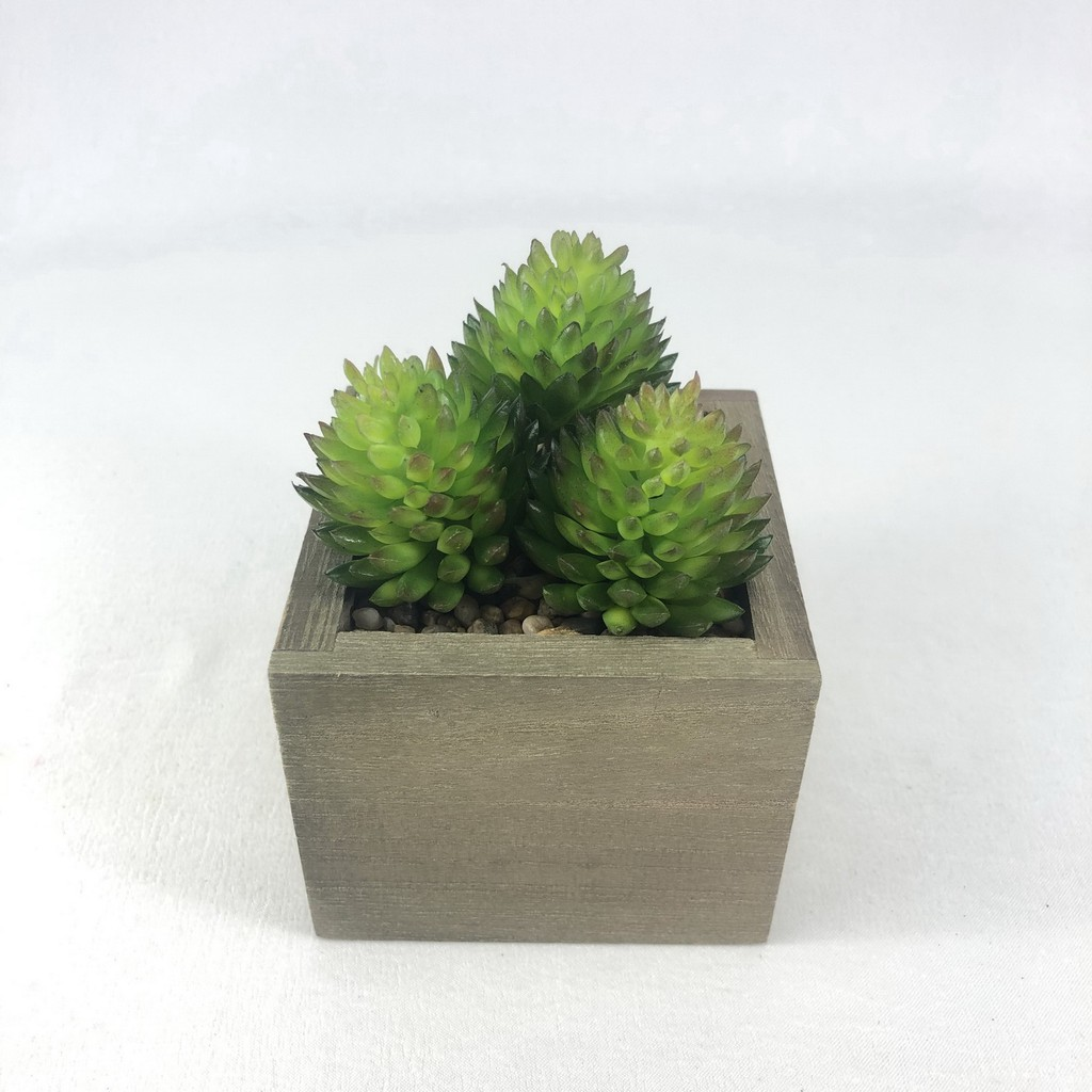 SET 3 หัว 70 บาท PS-013(ไม่รวมกระถาง) Succulent plant head ไม้อวบน้ำปลอม พืชฉ่ำน้ำ พืชปลอมจัดสวนจิ๋ว สวนถาด สวนในขวดแก้ว