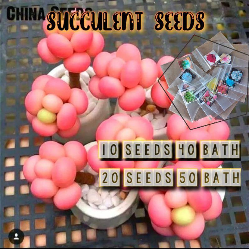 🍃เมล็ดพันธ์ไม้อวบน้ำหายาก Succulent🍃 Echinopsis Tubiflora