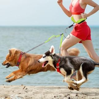 Hands free dog leash running adjustable waist lead rope training leashes  elastic reflective double handle pet leash for ราคาที่ดีที่สุด