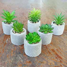 Phalaen House: ไม้อวบน้ำปลอม กุหลาบหิน/แคคตัส (cactus) พร้อมกระถางปูนเปลือยทรงกลม