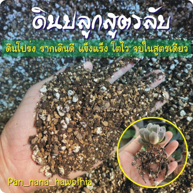 ดินปลูกฮาโวเทีย แคคตัส ไม้อวบน้ำทุกชนิด size M