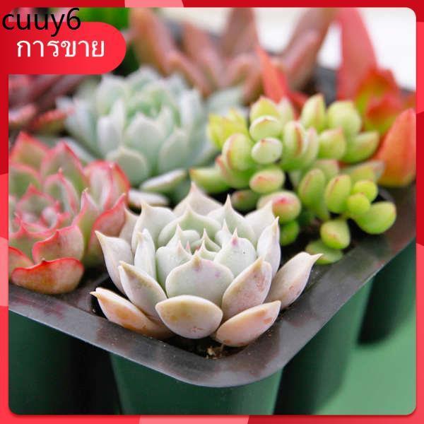 Succulents เมล็ด กุหลาบหิน ✦Succulents รวมกระถางสามเณรแพคเกจไม้อวบน้ำดอกไม้ในร่มและพืชสีเขียวกระถางเสียบไม้จัดส่งที่ดี♡