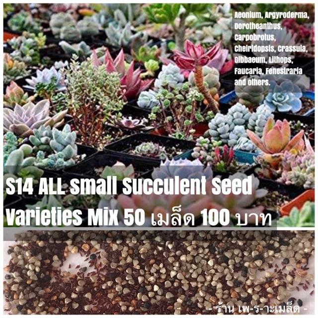 S14 ALL small Succulent Seed Varieties Mix 50 เมล็ด 100 บาท รวมทุกพันธุ์สายไม้อวบน้ำขนาดเล็ก