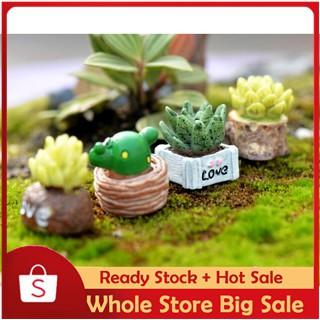พืชที่มีชีวิตชีวา Mini Cactus Fleshy ประดิษฐ์สวยงาม