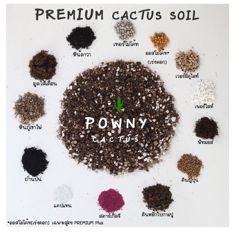 ดินปลูกแคคตัส ดินปลูกกระบองเพชร ดินปลูกไม้อวบน้ำ cactus โปร่ง เร่งดอก รากเดินดี ดินแคคตัส ดินปลูกแคตตัส ดินปลูกสมุนไพร