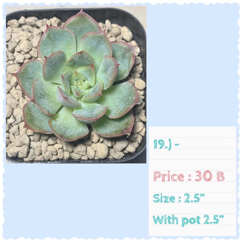 10 แถม 1 คละได้ กุหลาบหิน ไม้อวบน้ำ succulent
