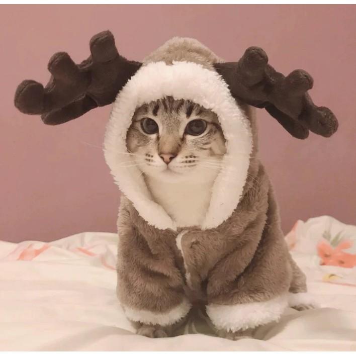 ชุดแมว ชุดสุนัข ชุดสัตว์เลี้ยง เสื้อขนแกะฤดูหนาว เสื้อผ้าที่อบอุ่นของสัตว์เลี้ยง  | Shopee Thailand