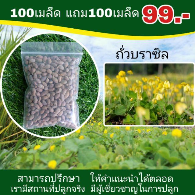 เมล็ดพันธุ์ถั่วบราซิล 100 แถมฟรี100เมล็ด